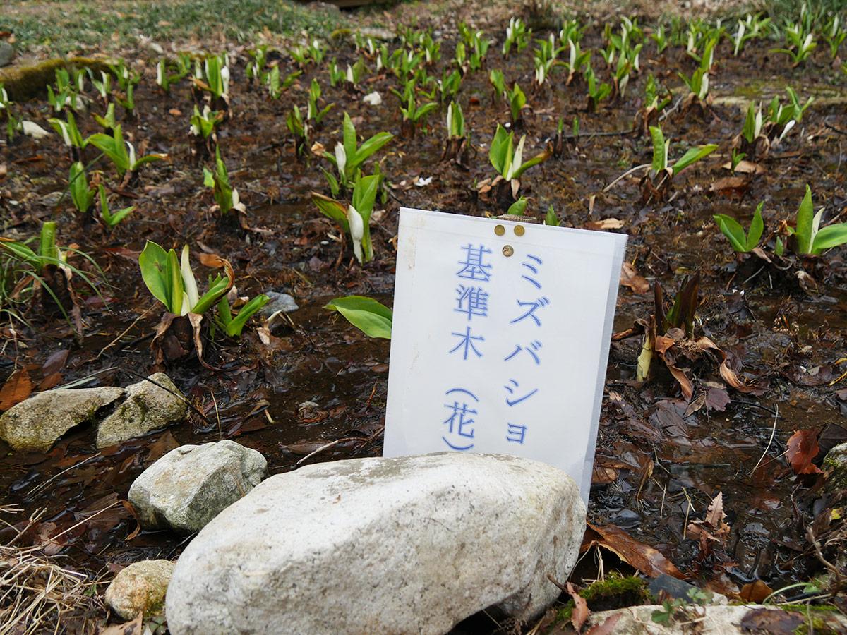 2015_0306mizubasho02