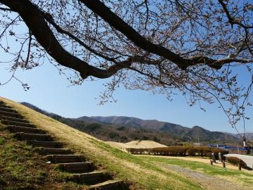 2015furusatosakura_0325_05
