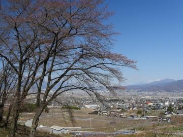 2015furusatosakura_0325_09