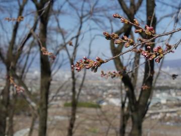 2015furusatosakura_0325_10