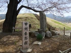 2015furusatosakura_0328_01