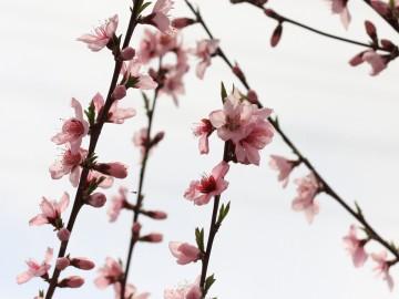 0416tokurajuro_04