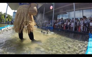 鮎を捕らえるスピードは物凄く早いです