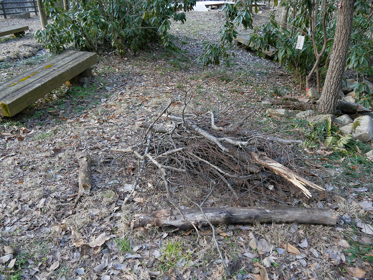 先日の強風でしょうか、園内のケヤキなど折れた枝が各所でまとめれていました