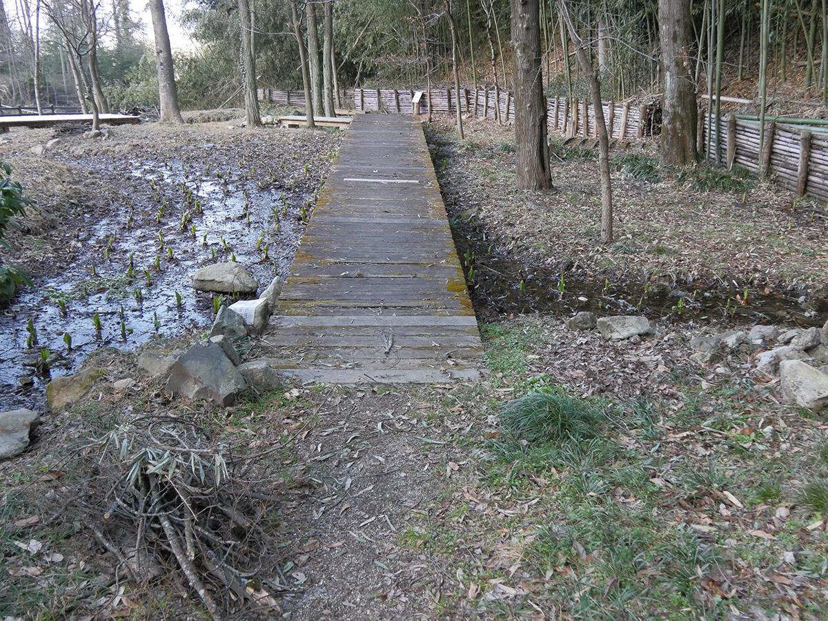 木の遊歩道は一部架け替えられ、傷んだ部分も修復されていました