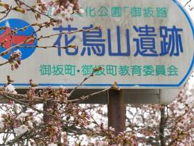 2016sakura_hanatori0330_001