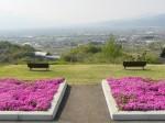 八代町ふるさと公園、甲府盆地に向けたベンチの後ろには芝桜と写っていませんが大きな銚子塚古墳があります