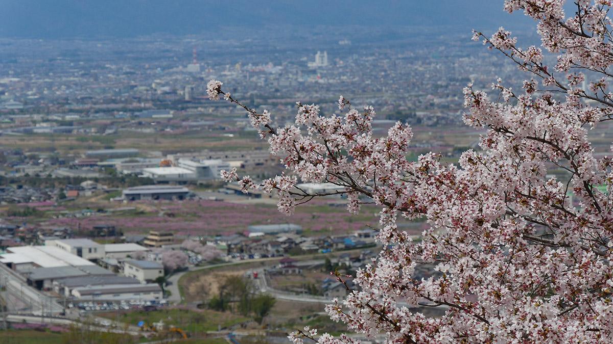2016sakura_furusato0406_006