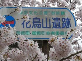 2016sakura_hanatori0405_001