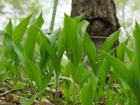 入り口付近の一番生育が進んでいる株の花芽です