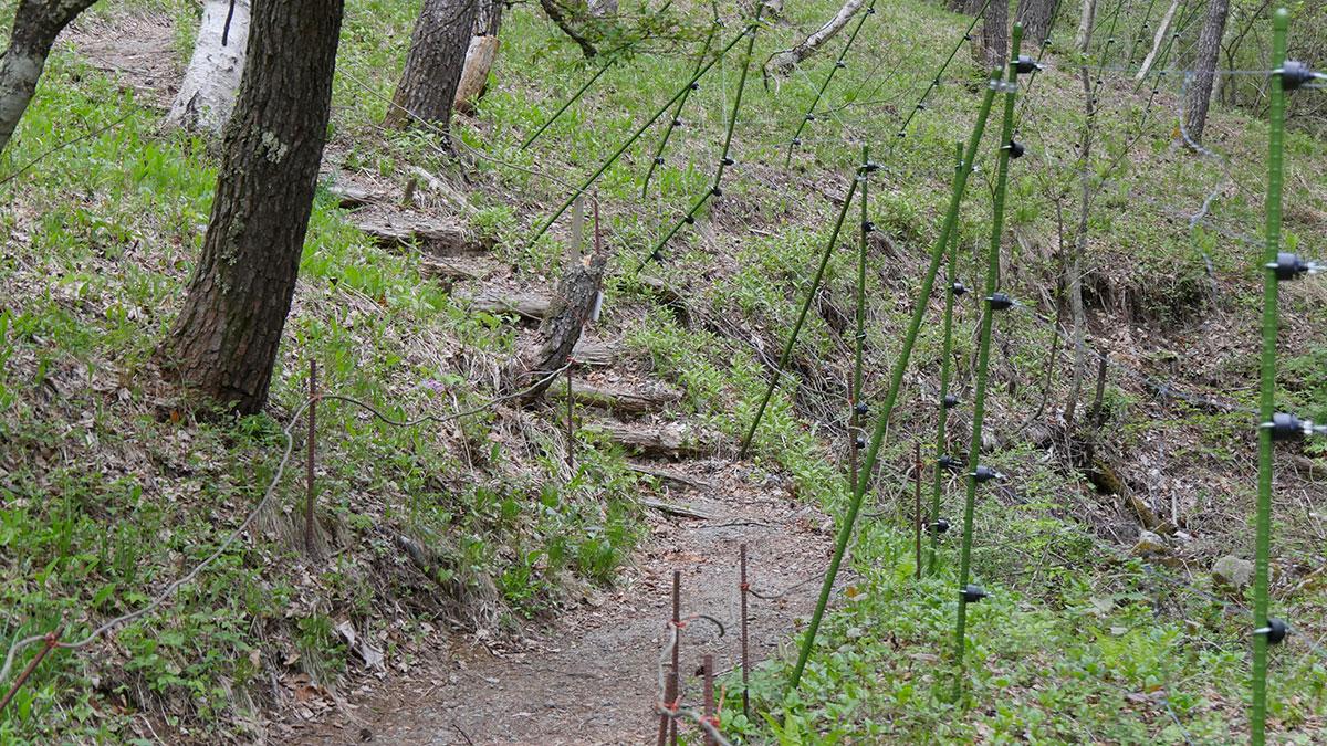 群生地斜面を登る右手には、高さのある獣除けの電柵
