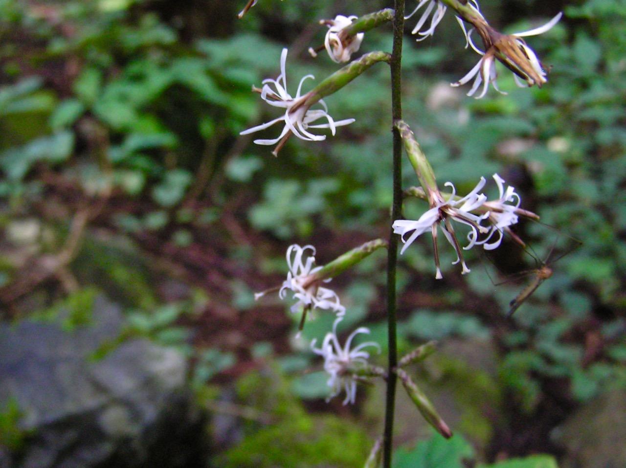 これも不思議な花