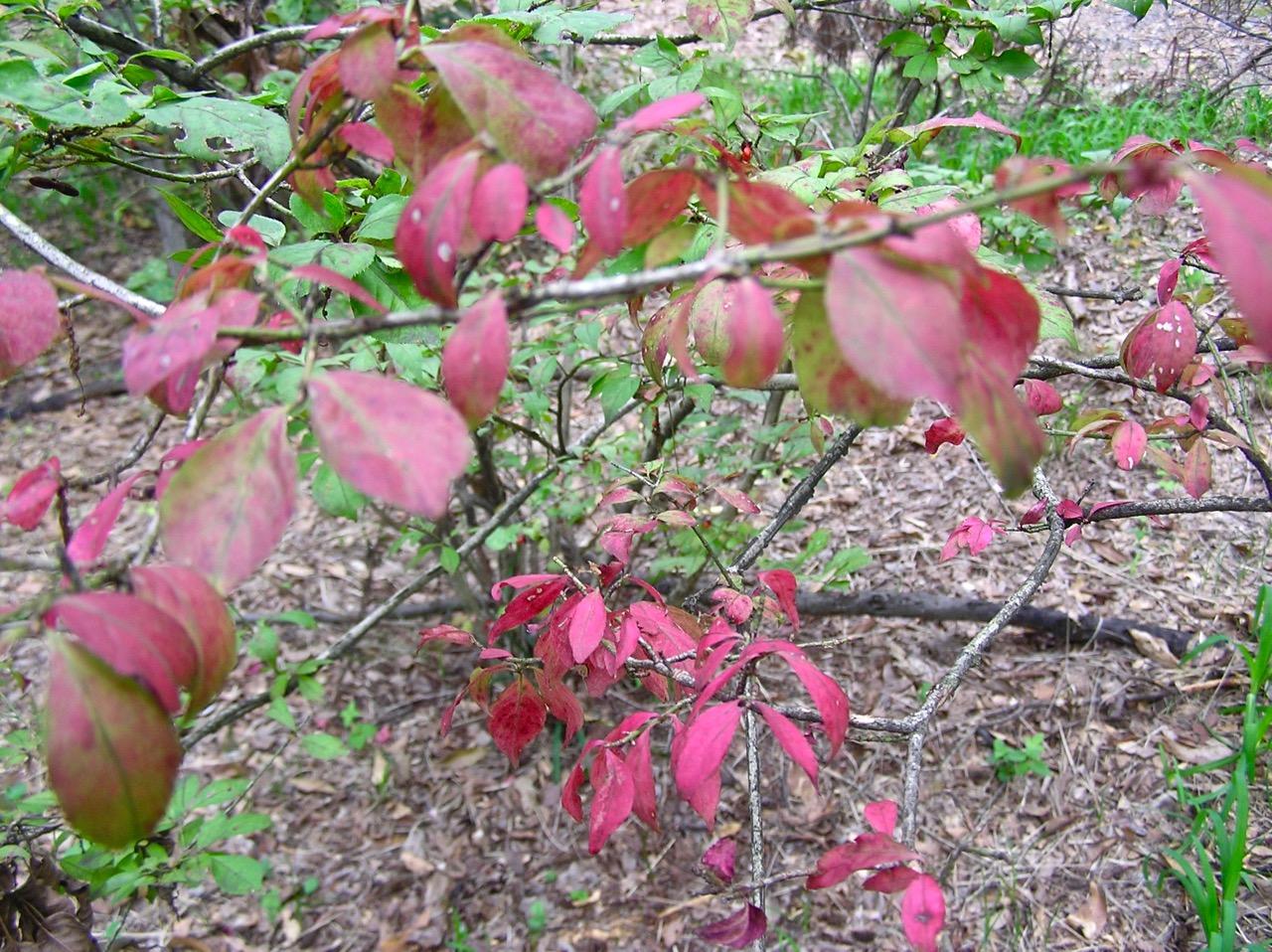 落葉低木は一部紅葉