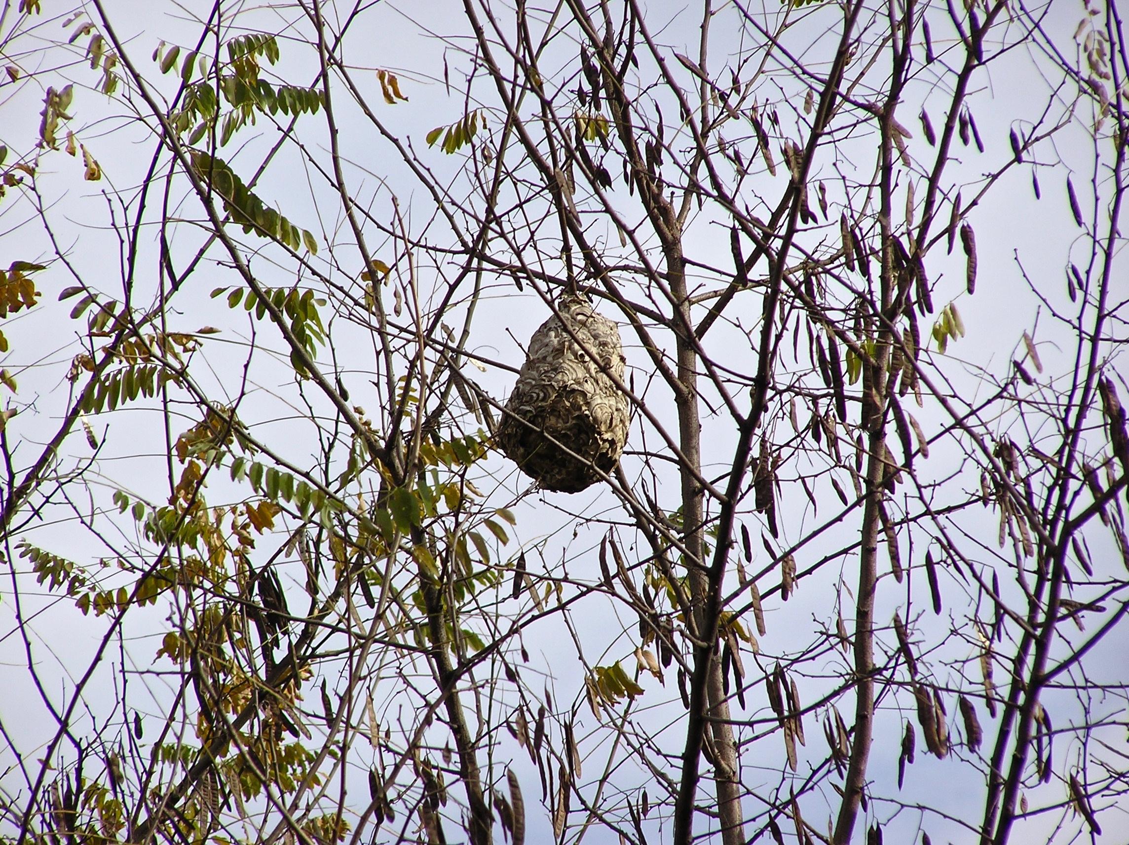 こっちは蜂の巣。