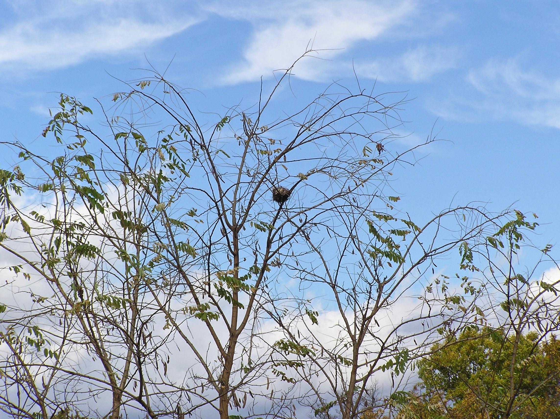 なにか木の枝に掛かっています
