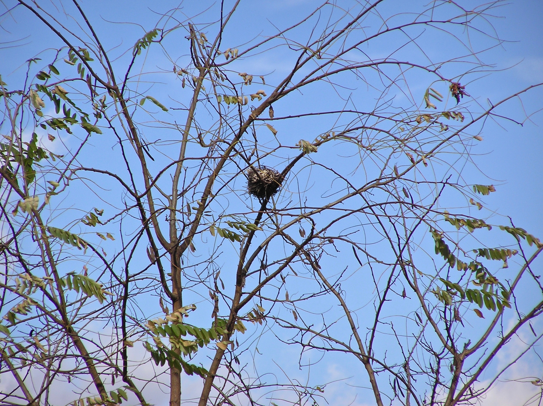 鳥の巣でした。
