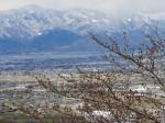 西山も春の雪化粧