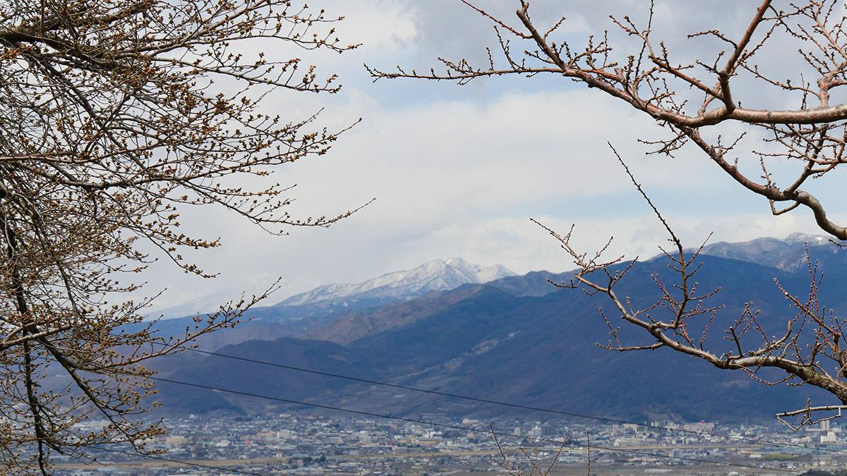 桜と桃と茅ガ岳