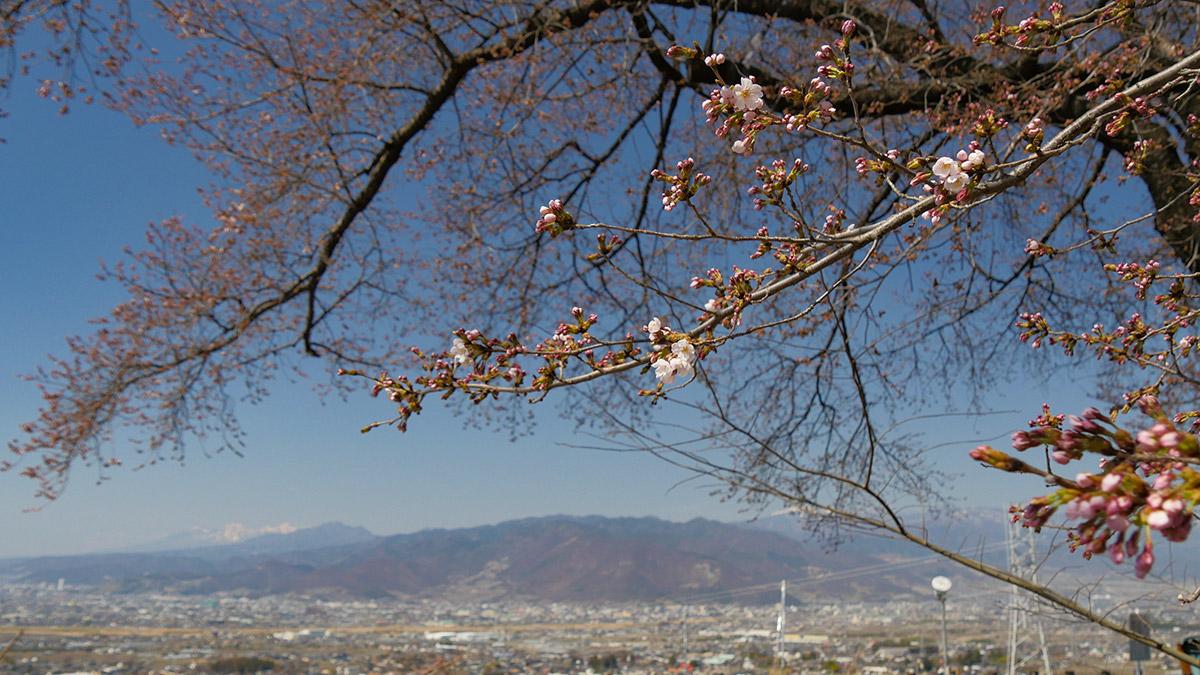 蚕影桜から甲府盆地・八ヶ岳方面
