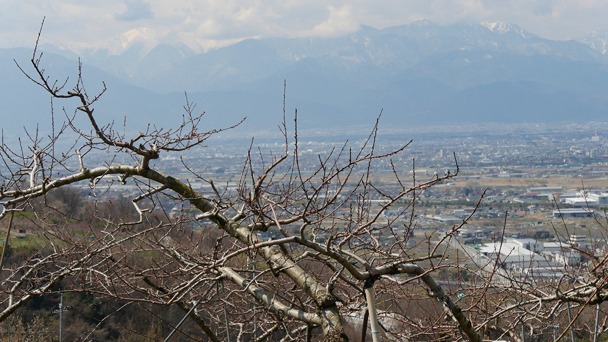 2017furusato_momo0403_004