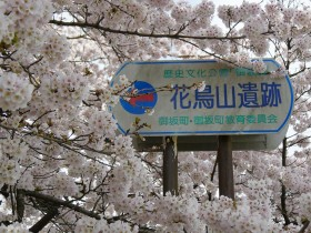 2017hanatoriyama_0412_001