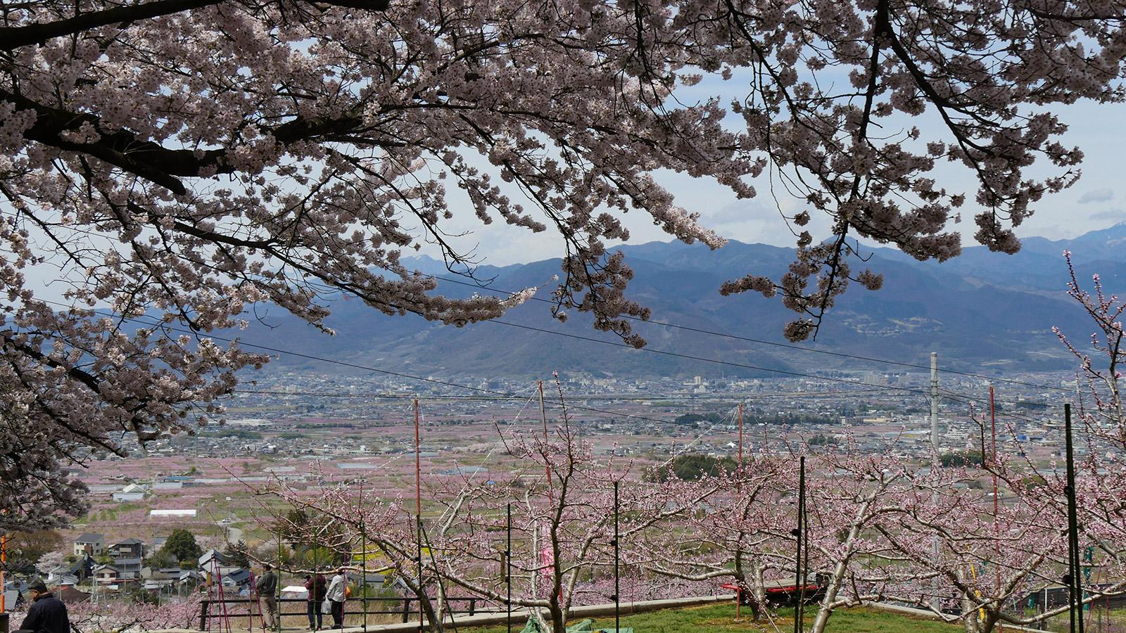 2017hanatoriyama_0412_003