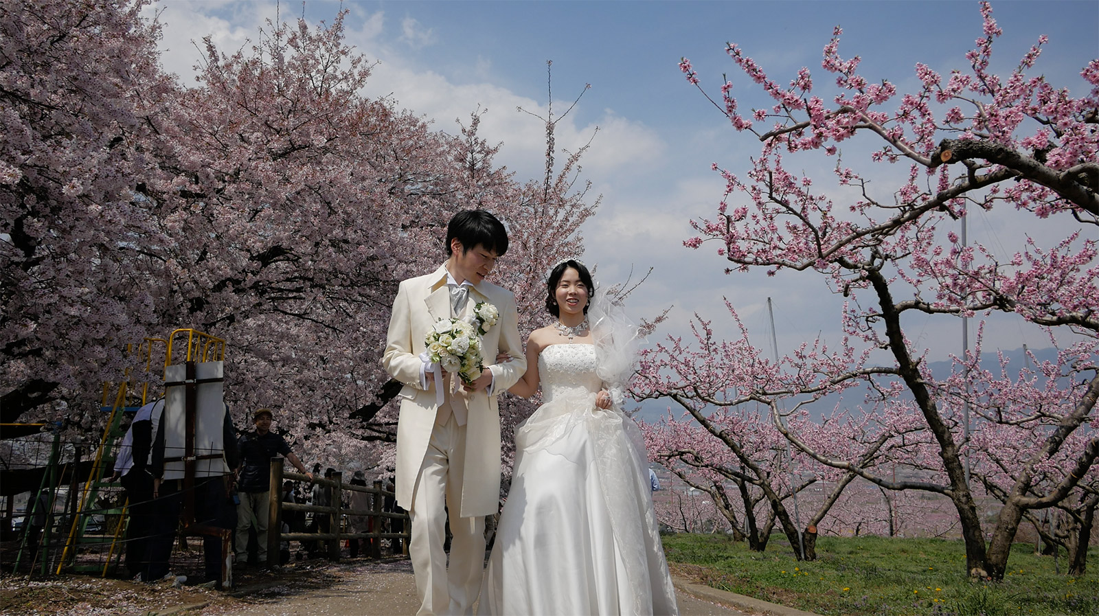 桃と桜が最高に見頃です!