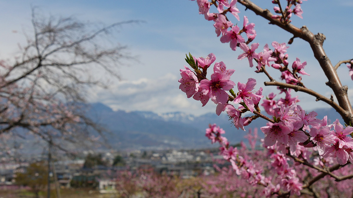 2017koyamajyo_momo0412_10