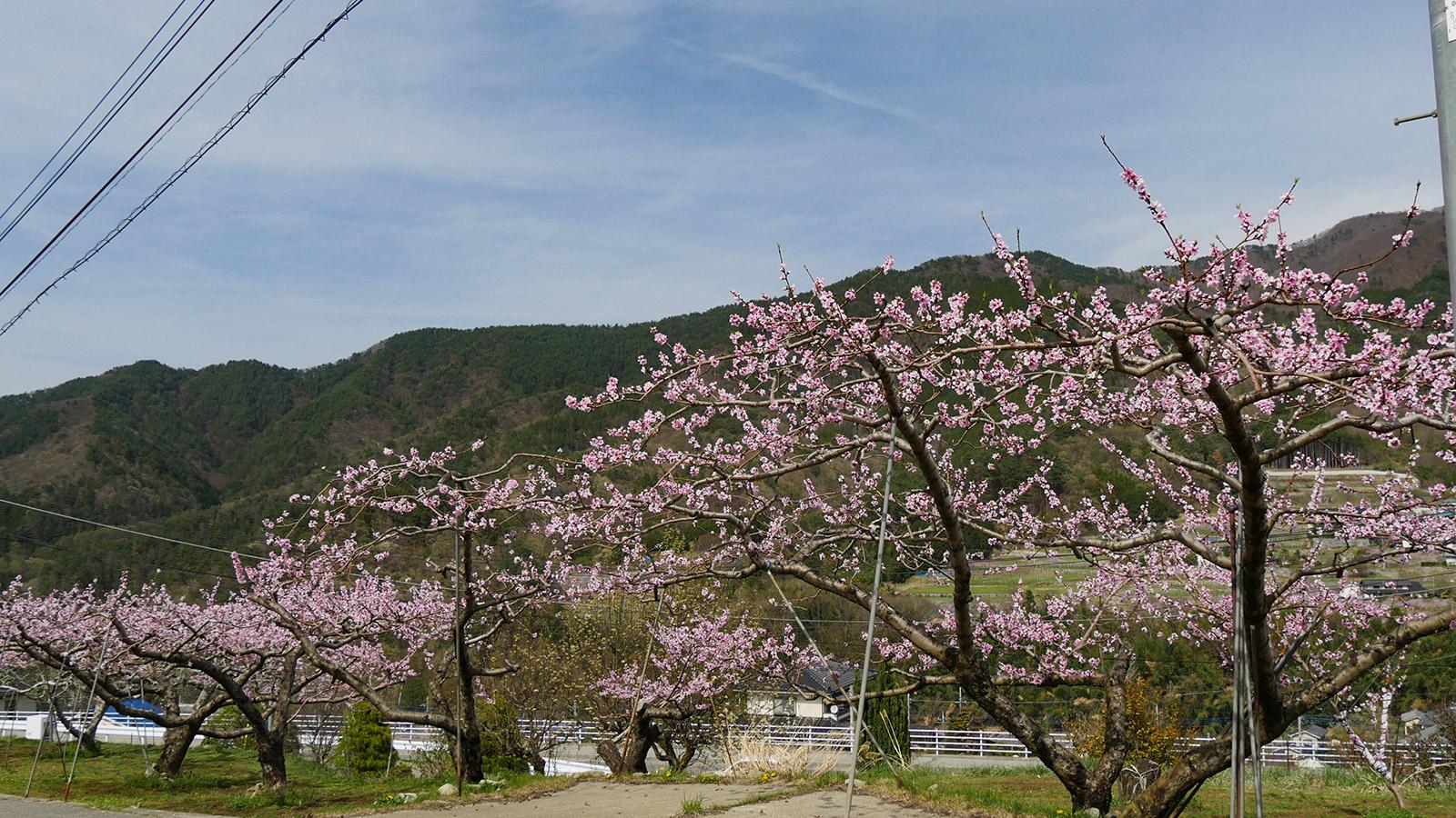 ここから公園反対側 檜峯神社入り口を入った付近