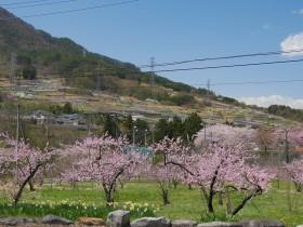 2017tokura_jyurou_momo0419_005