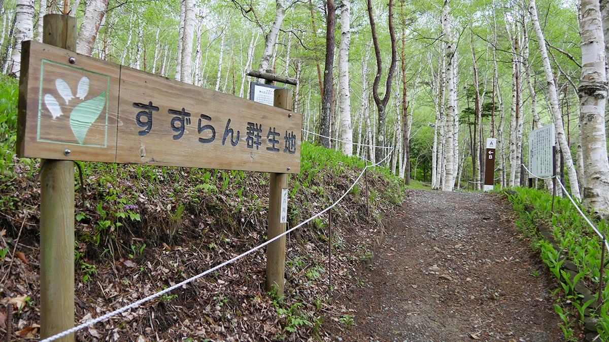 2015suzuran0518_001