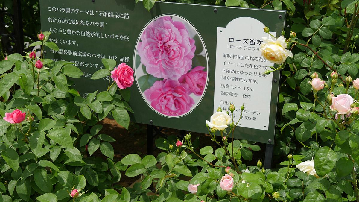 2017isawaonseneki0512_002
