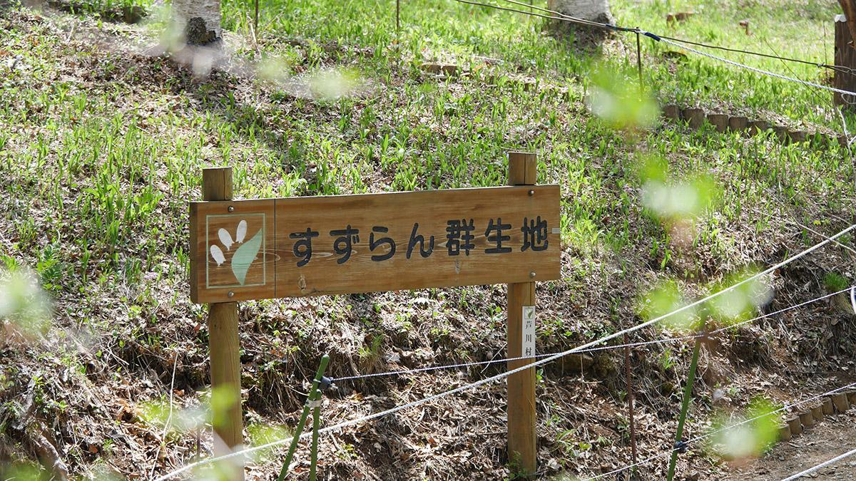2017suzuran0512_001