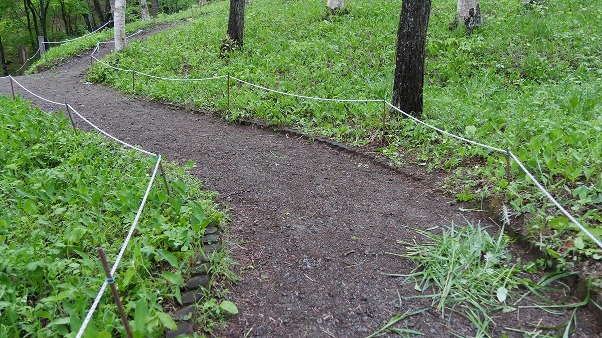 雑草は、すずらんを避けて取るので一度にたくさん取れないので手がかかりますね