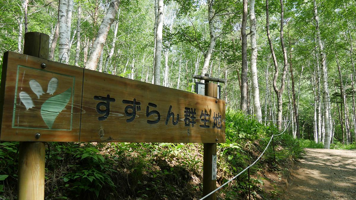 2017suzuran0611_001