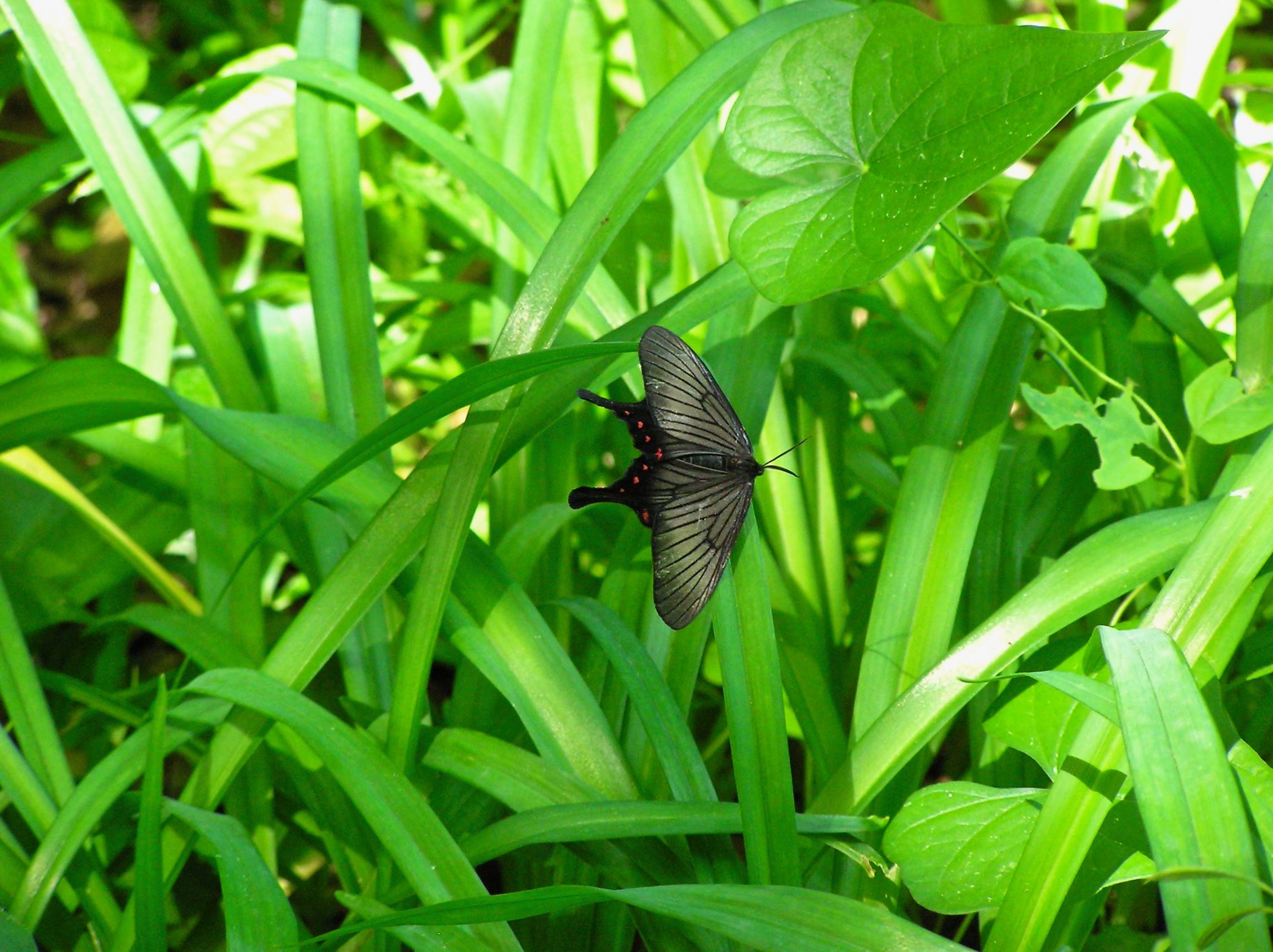 蛾の仲間です