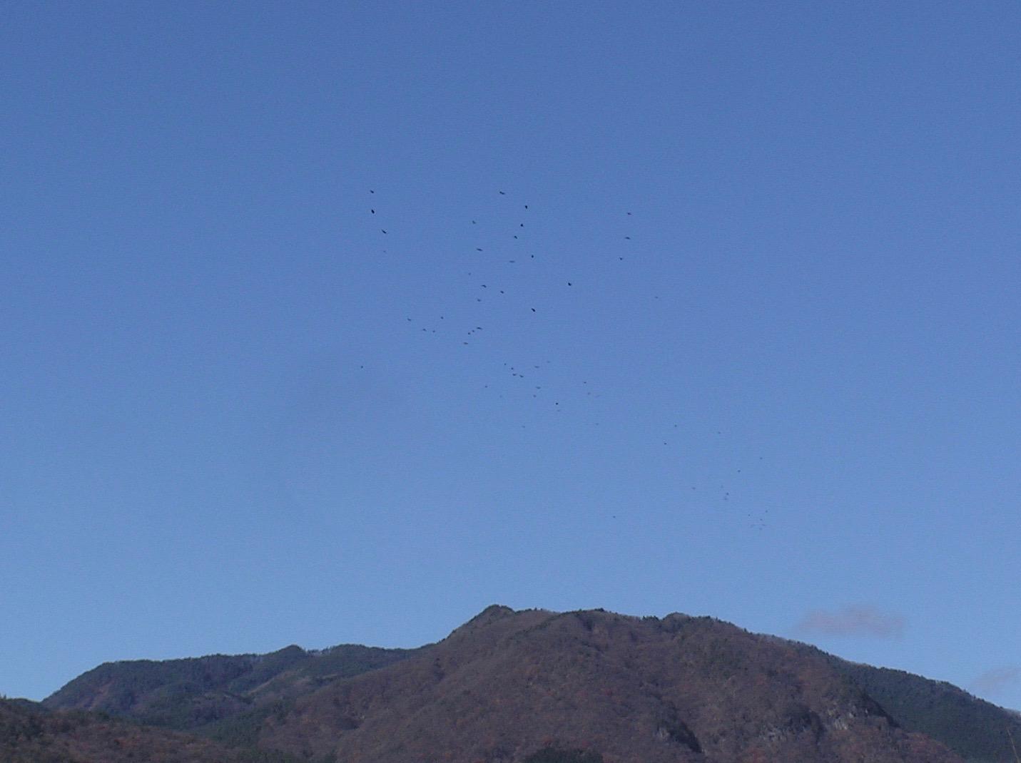 笛吹の青空に鳥の群れ…