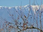 ツグミには雪山が似合いますね。