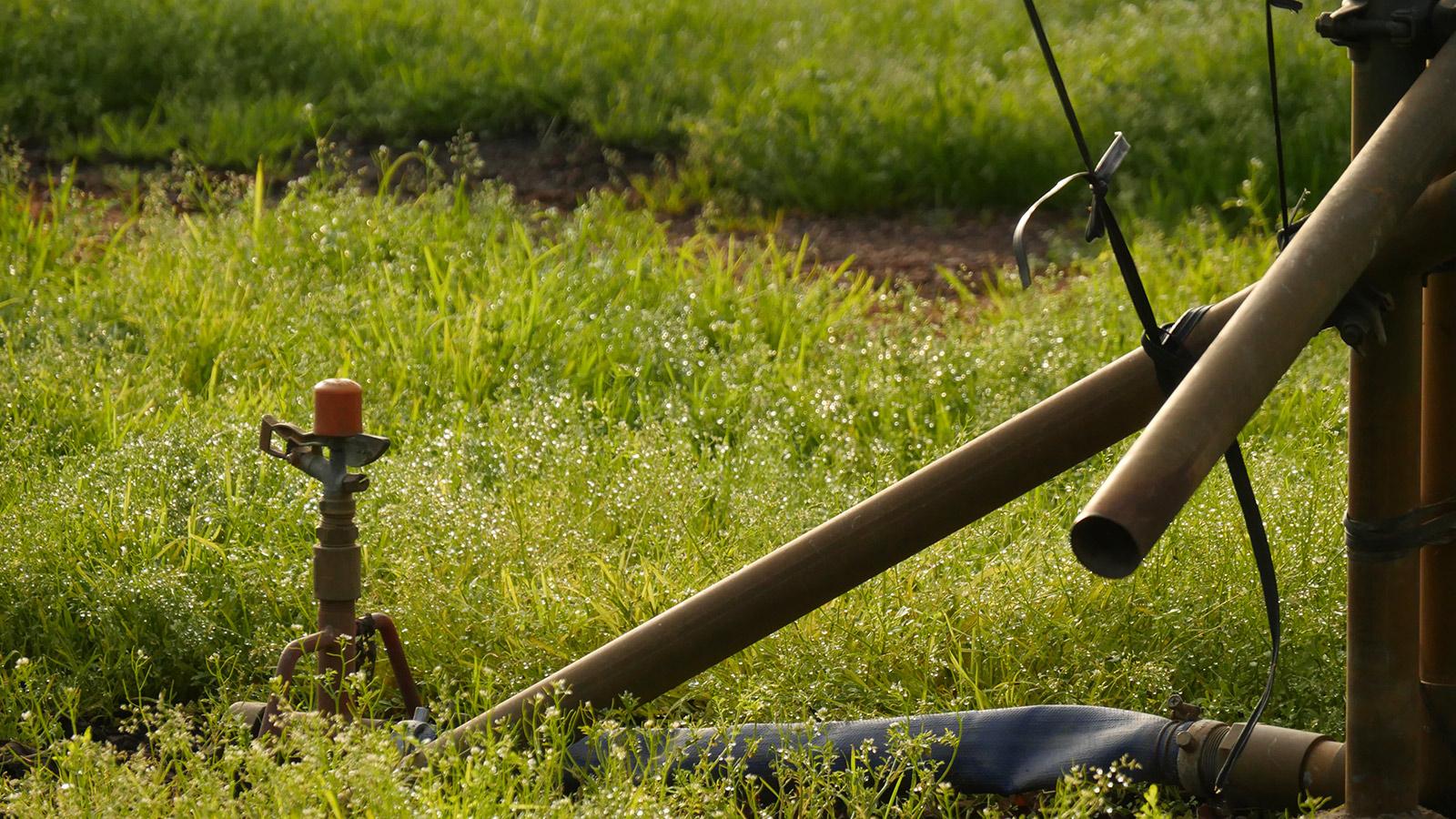 スプリンクラーでの散水も行われていますので、この時期、外がだいぶ乾燥しているのでハウス内に入るとその湿度に安心します。