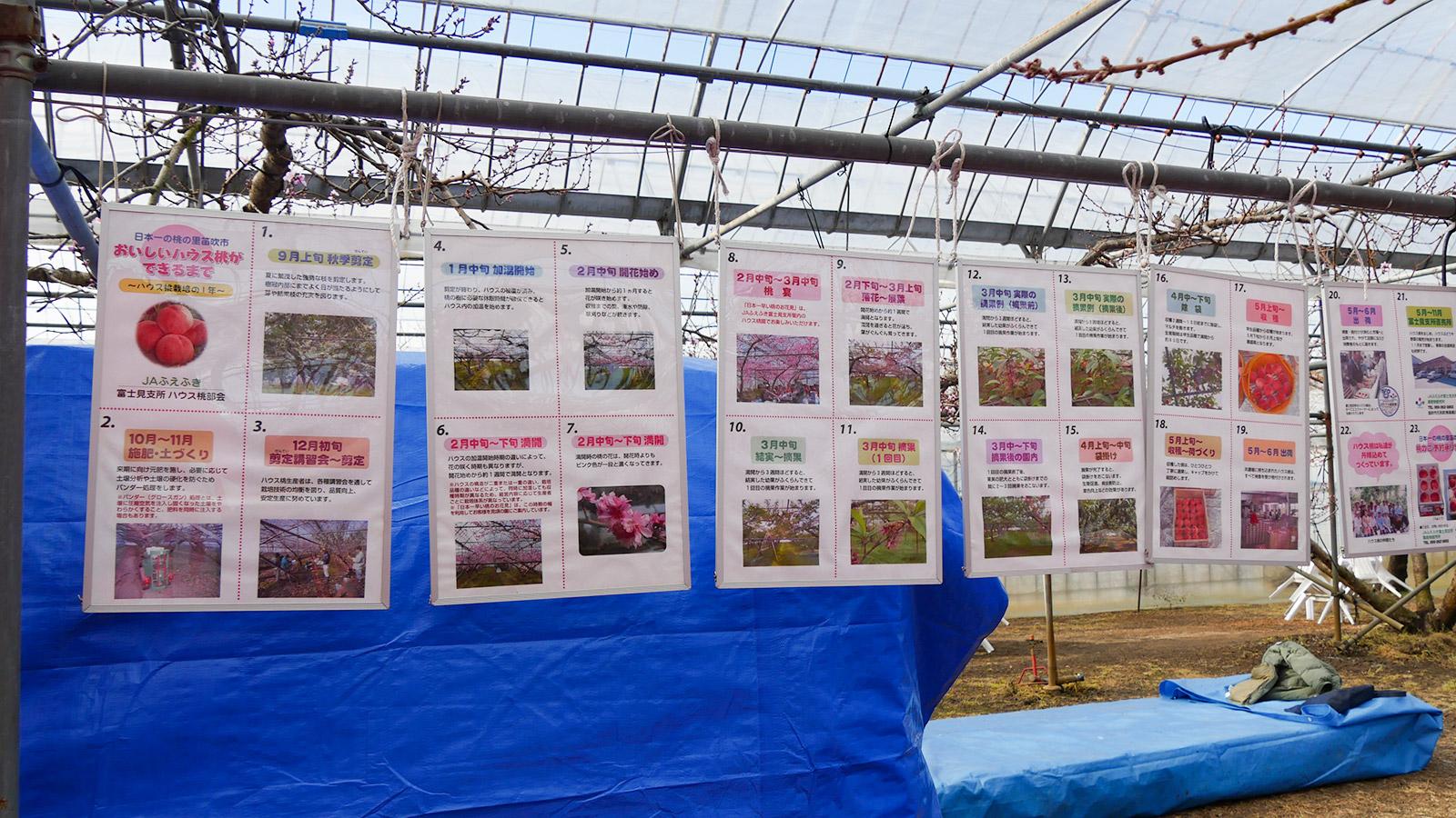 美味しいハウス桃が出来るまでの解説が、地元JAふえふきにより掲示されていました。