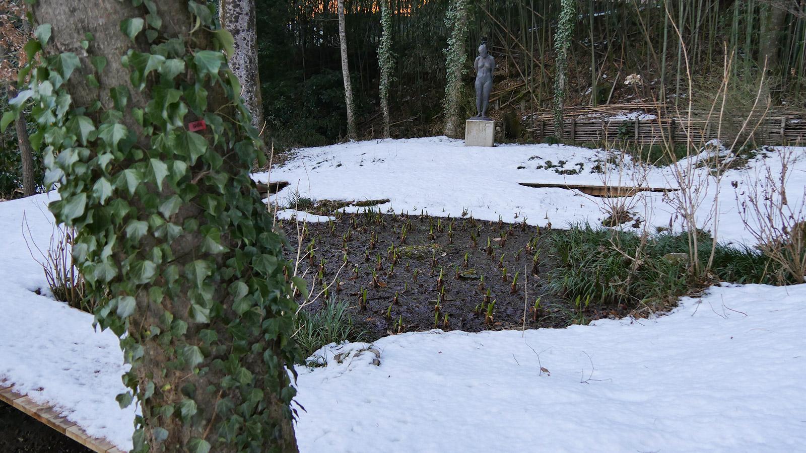 水芭蕉観察ゾーンの上部エリア、日陰のためまだまだ雪が溶けません