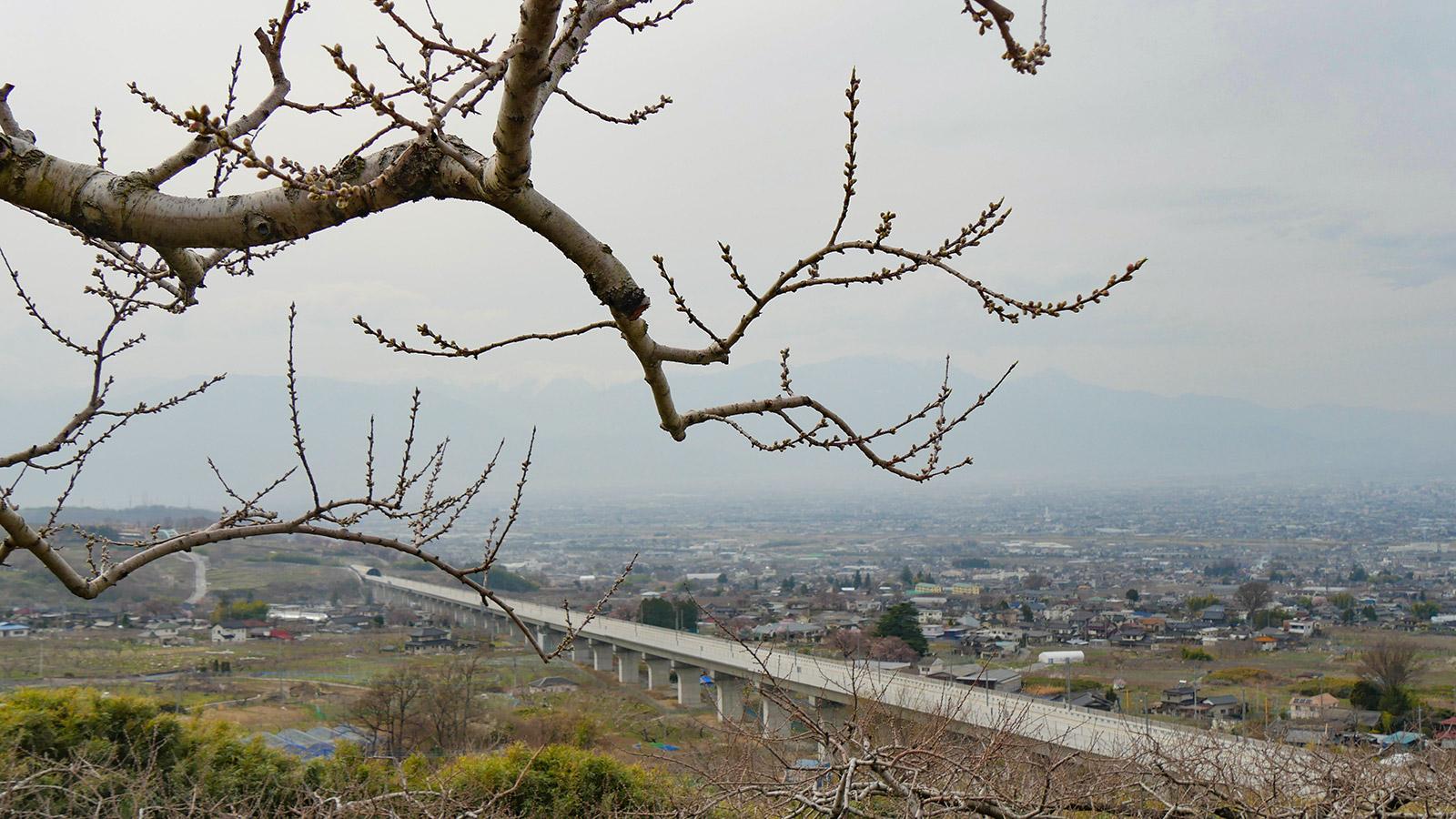 20180327hanatoriyama_momo003