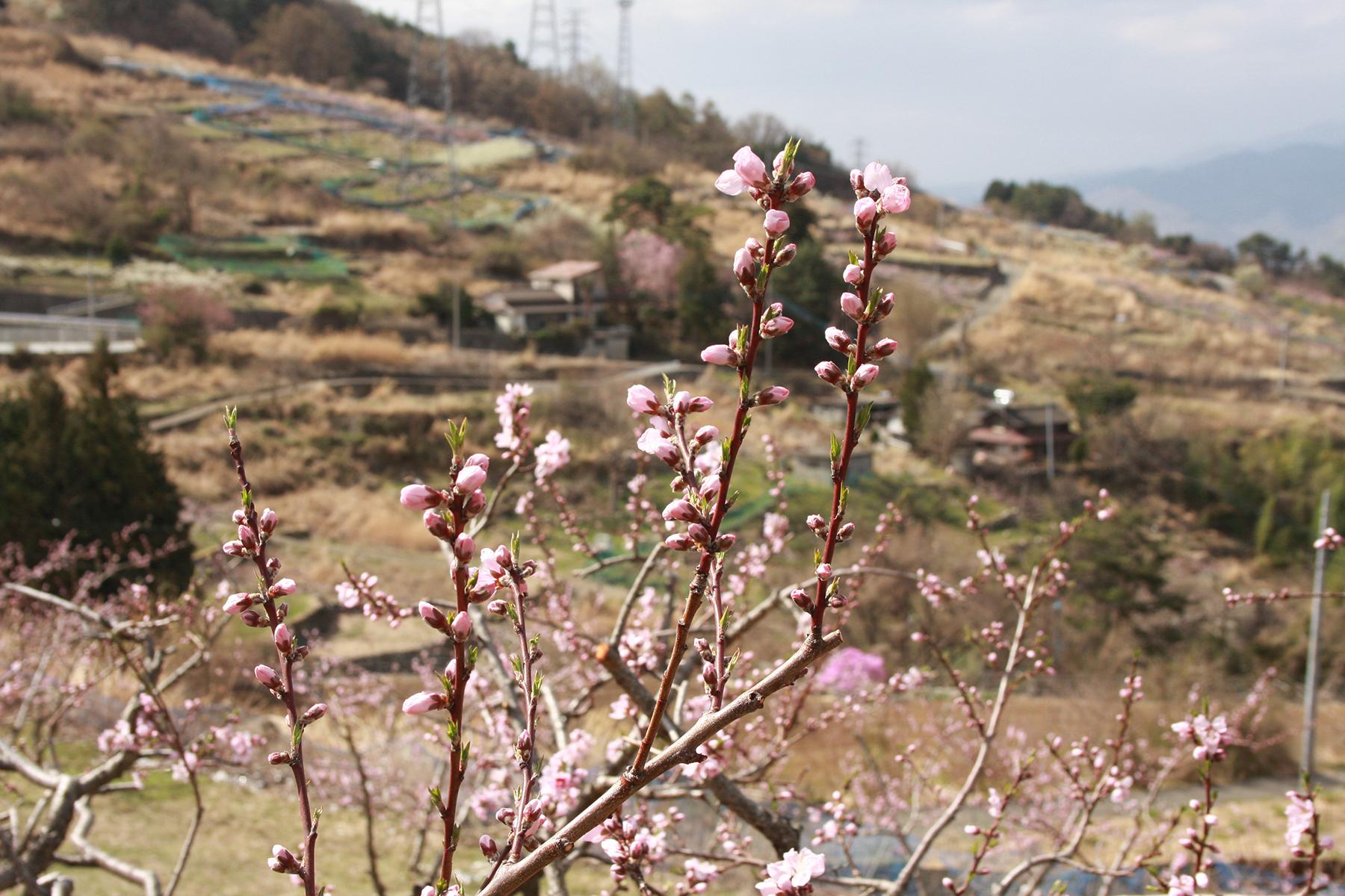 0406_tokurajuro04